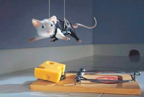 Лабораторные мыши необходимы армии для научных исследований freeolan.com - День дурака с оружием в руках | Военно-исторический портал Warspot.ru