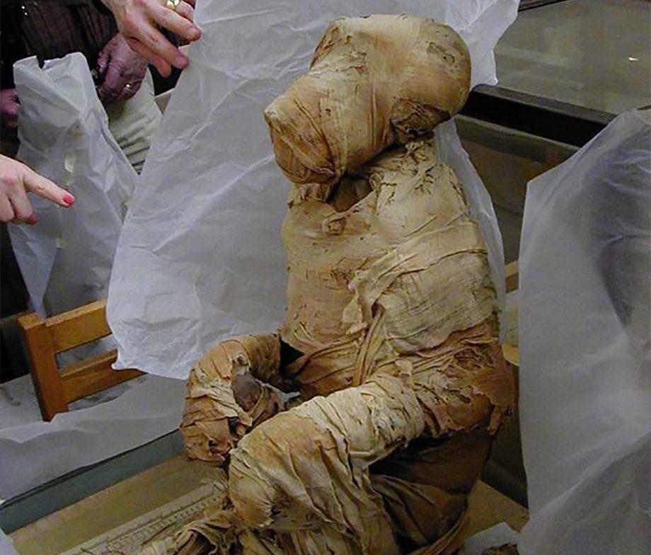 Мумия бабуина, привезённого моряками Хатшепсут из Пунта. britishmuseum.org